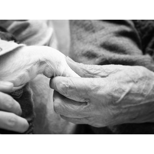 93歳の婆ちゃんからすると珠雄はひ孫になります。次回の再開を約束。😀 #dogslife#dogsofinstagram #jackrussell #ジャックラッセルテリア