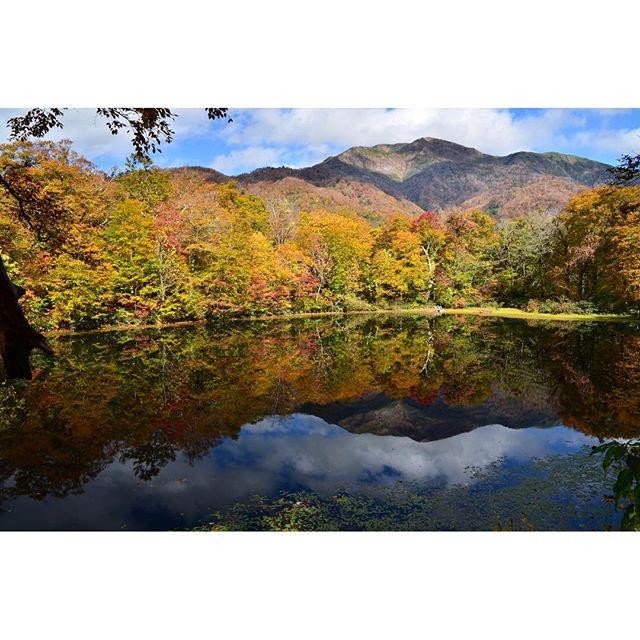 珠雄とハイキング。福井の刈込池へ昨年と同日なのに今年は葉っぱが残っています今年の紅葉は遅いのでしょうか?#落ち葉 #刈込池 #リフレクション #紅葉 #autumnleaves #reflection #reflection pond