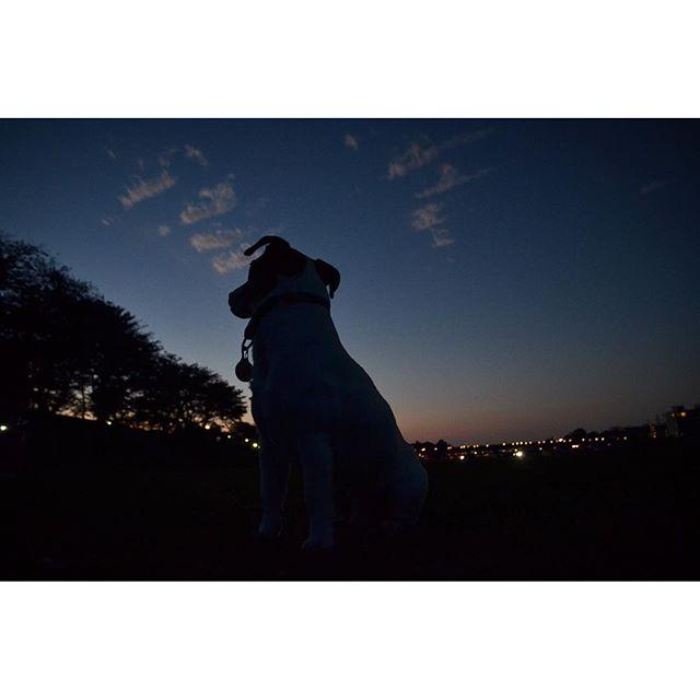 今日の夕方は雨。写真は昨日の夕方、きれいな夕方だったなぁ。#ジャックラッセルテリア #sunsettime #jackrussell #dogs #instadogs #dogslife #一日の終わり #natural
