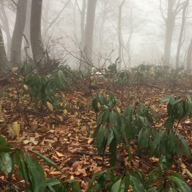 霧雨の中キノコ採りへ、わーい楽しいな!珠雄は、動物のうんp擦り付けてクサ雄になりましたました。#ジャックラッセルテリア #キノコ採り #instadog #dog #dogstagram #fall #jackrussell #mushroomhunting