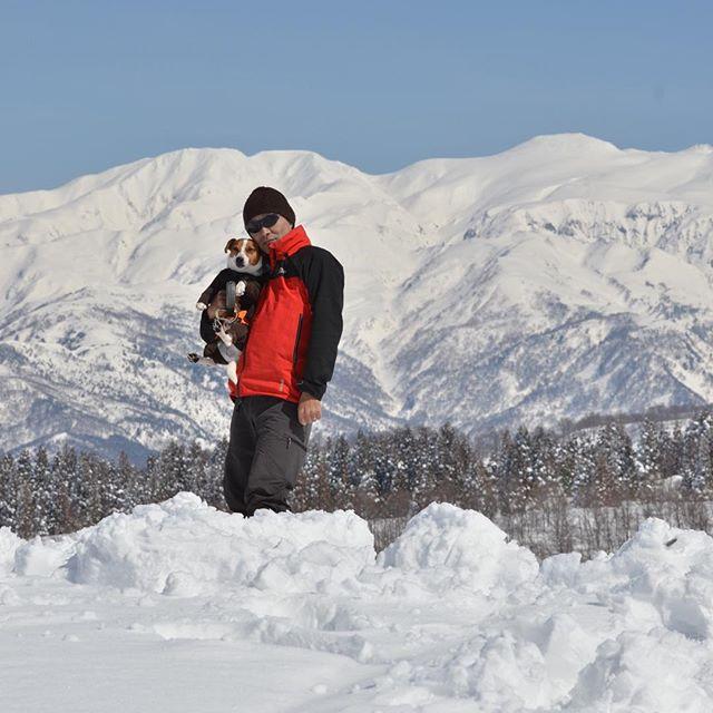 父ちゃん初登場。今日も雪山ハイキング。白山が綺麗。2017.3.12#ジャックラッセルテリア #取立山  #雪山ハイキング#jackrussellterrier #jackpurcell #instadog #snowdog #doglover #dogstagram #jrt