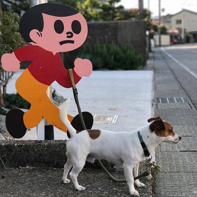 お散歩連れてって〜#jackrussellterrier #jackpurcell #instadog #dogstagram #ジャックラッセルテリア