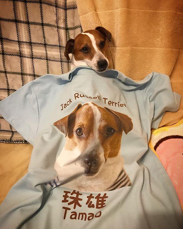 明後日は、琵琶湖うじゃっくに参戦です。父ちゃんはこれ着るよ。裏はお楽しみ?#jackrussellterrier #dogstagram #instadog #ジャックラッセルテリア #琵琶湖うじゃっく #ワンコT