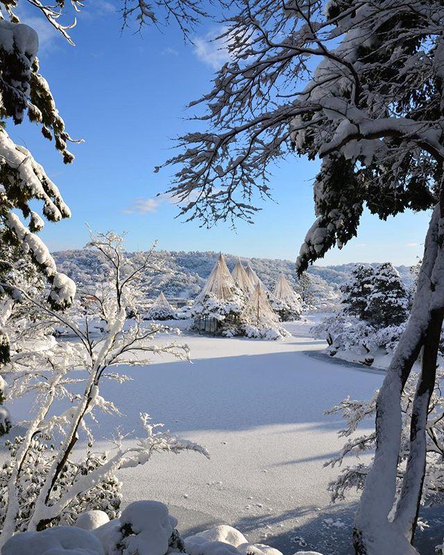 出勤前の朝の兼六園。凄く綺麗です。  #兼六園 #雪景色