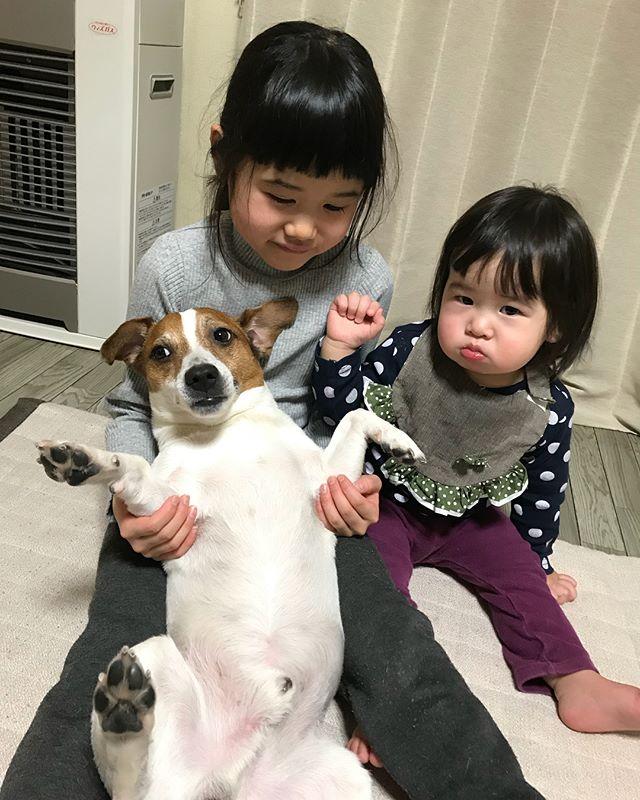 今回も姪っ子と一緒に遊びました。犬の務めです。一枚目は2年前の写真とは変わらな〜#姪っ子とジャックラッセル #ジャックラッセルテリア #犬の務め #jackpurcell #jackrussell #jackrussellterrier