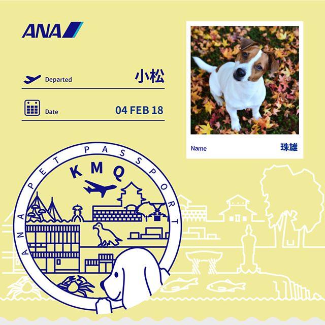何だかんだありましたが今から札幌へ帰省してきます。珠雄は6000円片道#jackpurcell #jackrussellterrier #jrt #ana #ペットパスポート