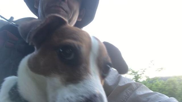 父ちゃん、「俺、空飛んでるみたいだ」これからいつもの渓流釣りだよ〜自転車でポイントまで行くのに抱っこ紐購入。この日の夜も疲れてぐっすりな珠雄。#jackrussellmoments #jackrussellterrier #jackrussell #ジャックラッセルテリア #渓流釣り #自転車犬